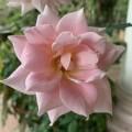 Hồng Thúy